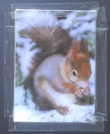 ecureuil de dominique